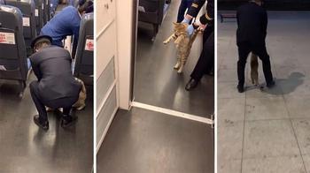 Безбилетную кошку вывели из поезда