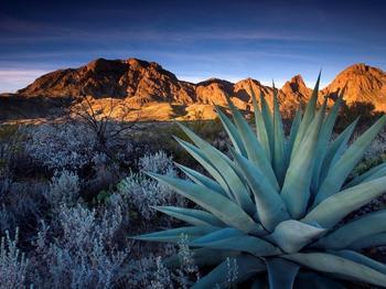 Топ-10 исчезающих видов растений
