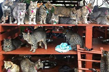В кошачьем заповеднике на Гавайях можно погладить сразу до 500 котиков