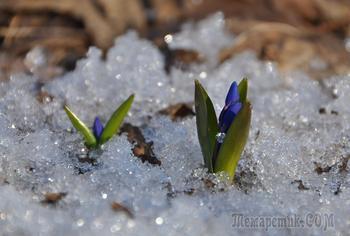 """""""О, весна без конца и без краю — без конца и без краю мечта!"""" (А. А. Блок)..."""