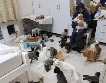 Она живёт в доме с 480 кошками и 12 собаками
