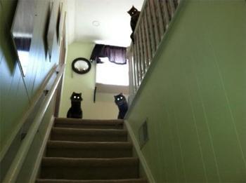 Зачем нужны фильмы ужасов, если есть такие животные?