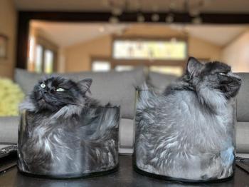 Котики — это жидкость, уморительные фото