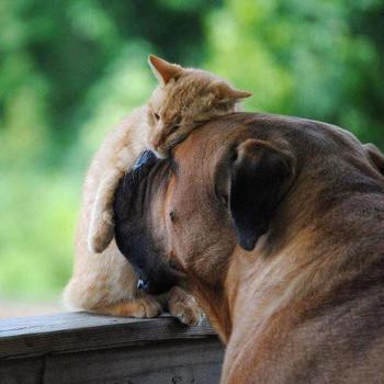 Ученые рассказали, почему кошки и собаки любят поглаживания по голове