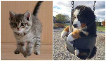 Самые умилительные фотографии животных