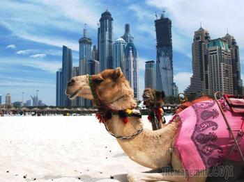 Удивительные факты о Дубае