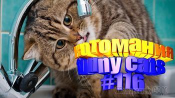 Смешные коты | Приколы с котами | Видео про котов | Котомания #116