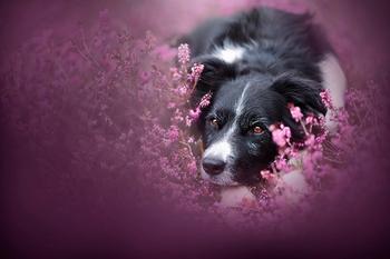 Выразительные фотографии собак