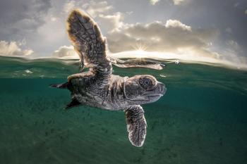 Подборка лучших фотографий, опубликованных журналом National Geographic за весну 2017