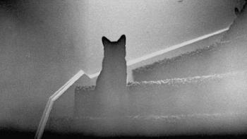 Призрак черная кошка