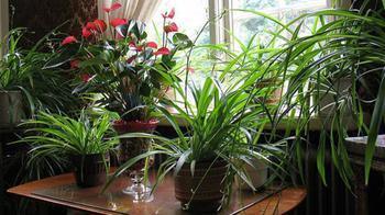 Комнатные растения с хорошей, положительной и плохой, отрицательной энергетикой