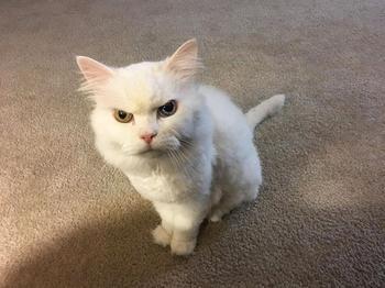 Недовольные коты