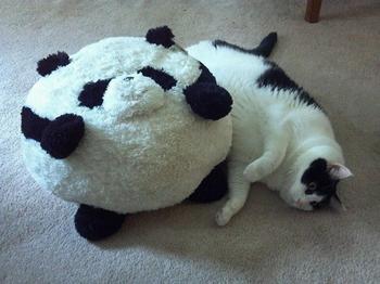 Очаровательные коты толстопузы