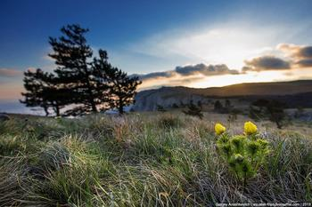 Весенний цветущий Крым