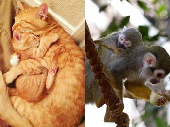 17 милых семейств из мира животных, которые растопят любое сердце