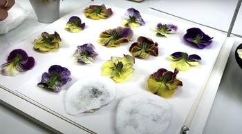 Как засушить цветы для творчества