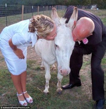 Теперь вы можете поцеловать лошадь или самые неловкие свадебные поцелуи