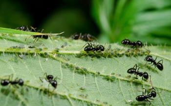 5 народных способов, которые помогут извести муравьев на участке в разгар сезона