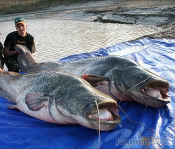 Как они поймали этих гигантов?