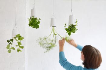 Сад вверх тормашками: оригинальные подвесные кашпо
