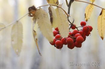 Прогулки по лесу с фотоаппаратом. Осень