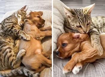 15+ милейших фото животных, которые умеют дружить лучше некоторых людей