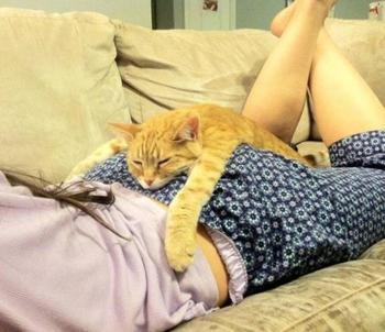 Животные которые умеют отдыхать
