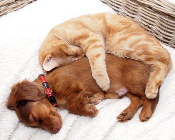 19 котов, которые по уши втрескались в собак