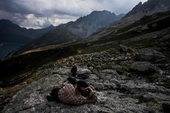 Работа мечты: как живёт пастух в Альпах