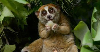 15 опасных животных, которых мы считаем милыми и добрыми