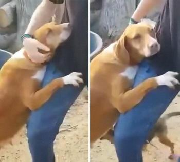 Собака из приюта обняла репортёра в надежде, что тот её заберёт и он не смог устоять