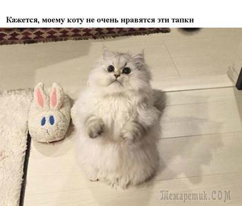 Забавные котики, рожденные бесконечно радовать людей