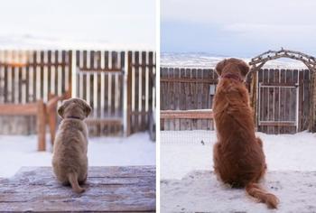13 очаровательных щенков, которые выросли слишком быстро