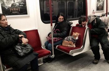 Самые очаровательные пассажиры, которых можно встретить во время поездки