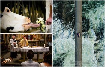 А свадьба пела и плясала: 18 улётных фотографий, от просмотра которых останутся неизгладимые впечатления