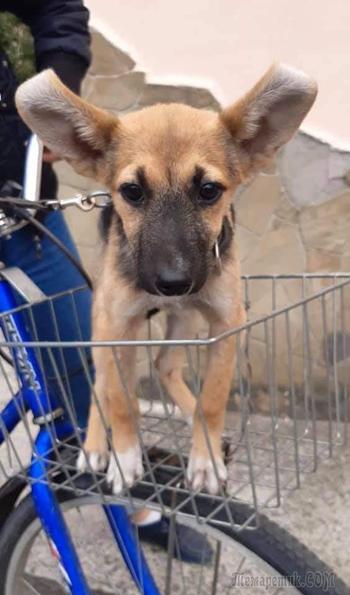 Кира - пятимесячный щенок-подросток, у которого нет дома.....