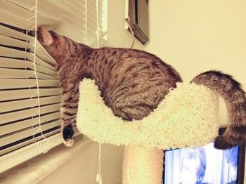 13 признаков того, что ваш кот без ума от вас