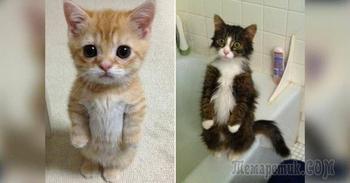 Несколько смешных котиков, которые умеют стоять на задних лапках