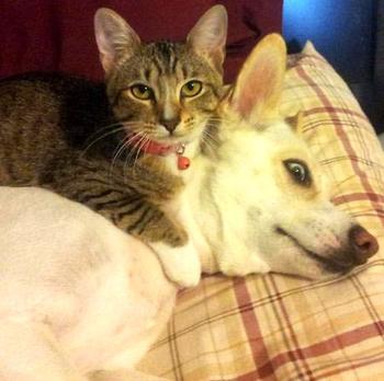 Люди делятся фотографиями своих кошек и собак, которые живут вместе, и это весело