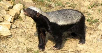 7 опасных животных с мимимишным внешним видом