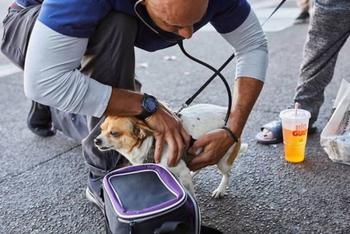 Калифорнийский ветеринар ходит по улицам и бесплатно лечит животных бездомных людей
