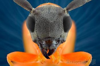 Макромир насекомых в фотографиях