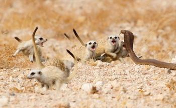 Забавные животные в самых удачных кадрах победителей конкурса «Фотограф дикой природы 2018»