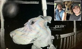Убежавшая из дома собака вернулась ночью и начала звонить в дверь