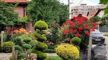 Красота во дворе