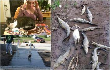 20 невероятно наглых, но забавных животных, которым наплевать на мнение окружающих