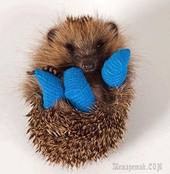 Очаровательные животные с маленькими гипсами, которые растопят ваше сердце