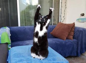 20 смешных котов, которые наотрез отказываются вести себя как нормальные животные