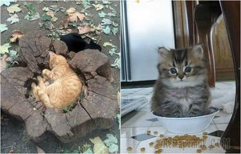Невероятно, но факт: 20 неопровержимых доказательство, что кошки поместятся где угодно