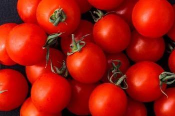 Самые неприхотливые сорта томатов